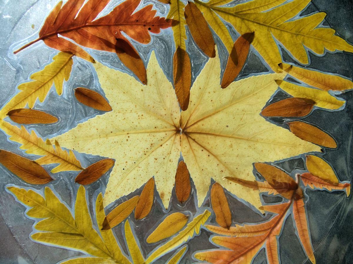 capturing the colours of autumn  leaf mandalas  september 2013   u2013 hannah u0026 39 s art club
